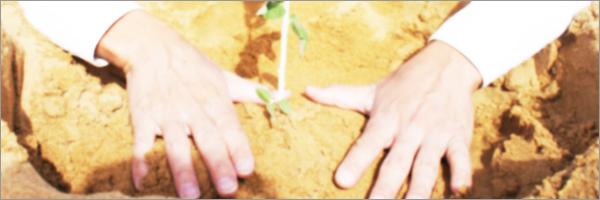 事例3 「木を植える男」