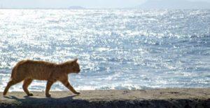 キツネとライオンの天職心理学
